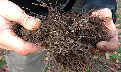 Evaluating Root Structures